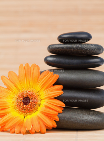 Orange sunflower and a black stones stackの写真素材 [FYI00487638]