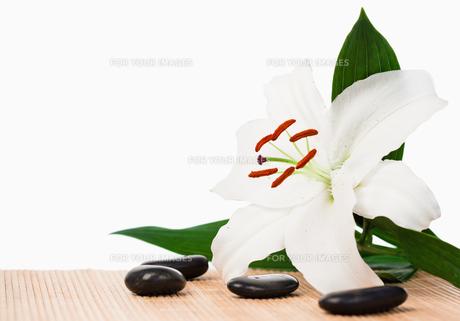 White hibiscus surrounded by black stonesの素材 [FYI00487707]