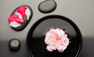 White and pink carnation floating on a bowl withblack stones around it and petals on one of the stonの写真素材 [FYI00487723]