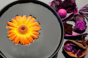 Orange gerbera floating in a black bowl and purple dry flowersの素材 [FYI00487808]