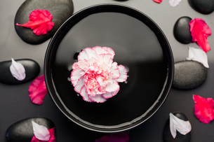 White and pink carnation floating in a black bowl surrounded by black stones and petalsの写真素材 [FYI00487858]