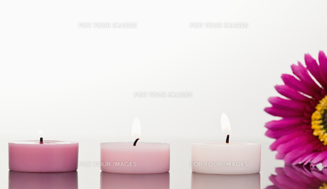 Lighted candles and a pink gerberaの写真素材 [FYI00487877]