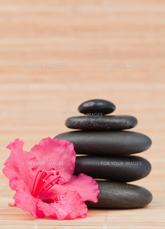 Pink orchid next to a black stones stackの素材 [FYI00487882]
