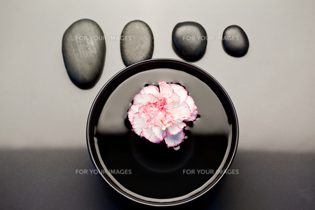 Pink and white carnation floating in a black bowl with aligned black pebbles above itの写真素材 [FYI00487904]