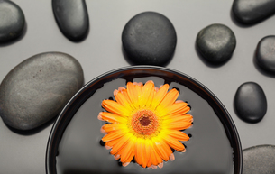 Orange gerbera floating in a bowl surrounded by black pebblesの写真素材 [FYI00487911]