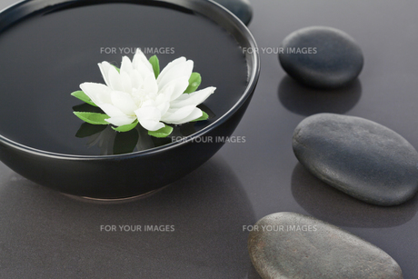 White flower floating in a black bowl surroundedの写真素材 [FYI00487966]