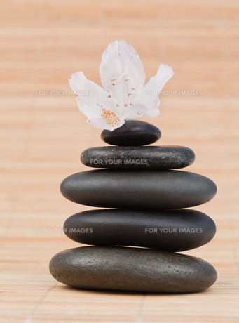 White orchid on a black stones stackの素材 [FYI00488006]
