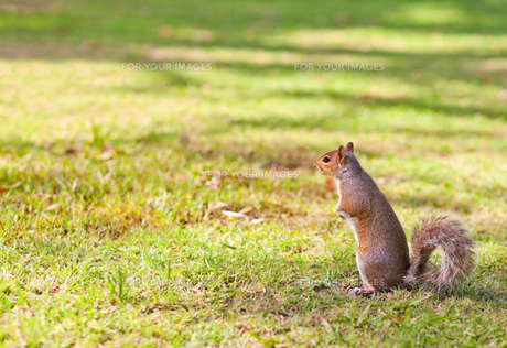 Squirrel in the parkの写真素材 [FYI00488048]
