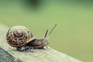 Close up of a snailの写真素材 [FYI00488060]