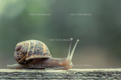 Close up of a small snailの写真素材 [FYI00488068]