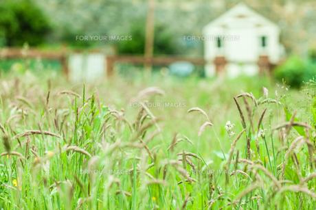 Rural scene of a fieldの写真素材 [FYI00488081]