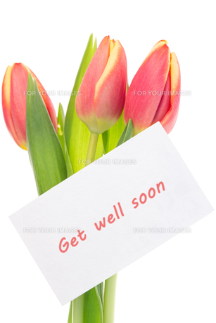 Pink and yellow tulips with get well soon greetingの素材 [FYI00488399]