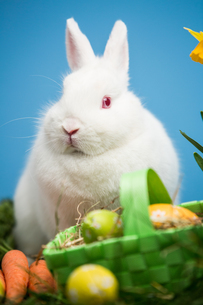 White rabbit sitting behind easter eggs in green basketの写真素材 [FYI00488412]