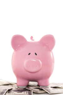 Close up of a pink piggy bank on dollarsの写真素材 [FYI00488419]