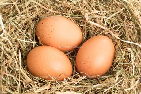 Three eggsの素材 [FYI00488424]