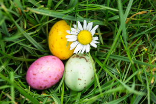 Small easter eggs nestled in the grass with a daisyの写真素材 [FYI00488431]