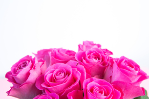 Bouquet of pink roses with copy spaceの写真素材 [FYI00488434]