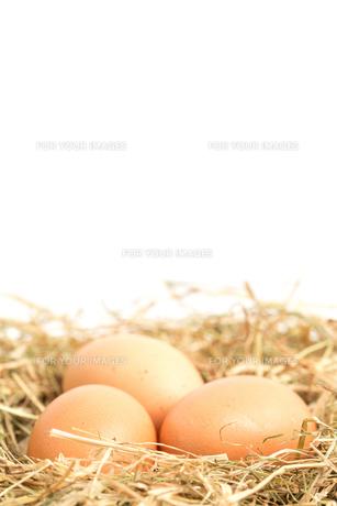 Three eggs nestled in straw nestの素材 [FYI00488474]