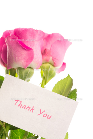 Thank you card with pink rosesの素材 [FYI00488481]