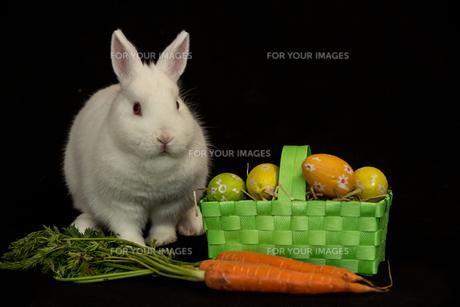 Easter bunny with green basket of eggs and carrotsの素材 [FYI00488487]