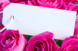Bouquet of pink roses with an empty cardの写真素材 [FYI00488489]