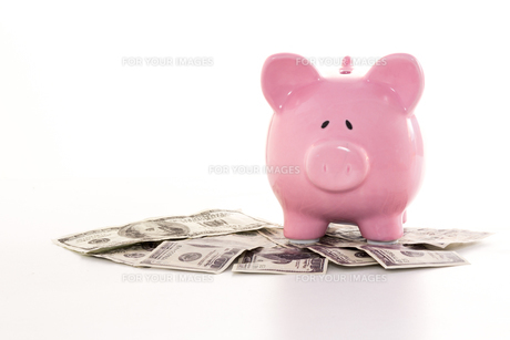 Pink piggy bank on dollarsの写真素材 [FYI00488508]