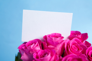 Bouquet of pink roses with blank cardの写真素材 [FYI00488512]