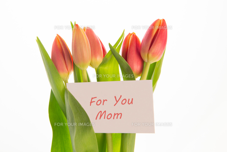 Bouquet of pink and yellow tulips with mothers day greeting cardの写真素材 [FYI00488526]