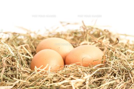 Three eggs nestled in strawの素材 [FYI00488539]