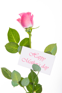 Pink rose with stalk and leaves and mothers day messageの素材 [FYI00488542]