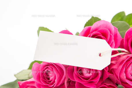 Close up of a beautiful bouquet of pink roses with a blank day card on a white backgroundの写真素材 [FYI00488545]