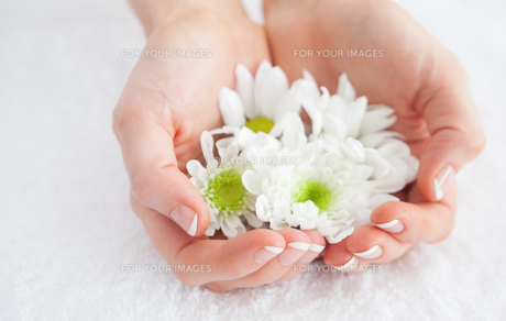 French manicured hands holding flowersの素材 [FYI00488677]