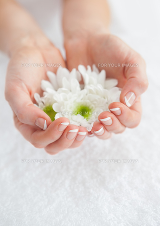 French manicured hands holding flowersの素材 [FYI00488691]