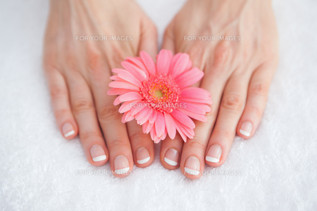 Flower on french manicured fingers at spa centerの写真素材 [FYI00488760]