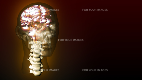 highly detailed animation of a human brainの素材 [FYI00488807]