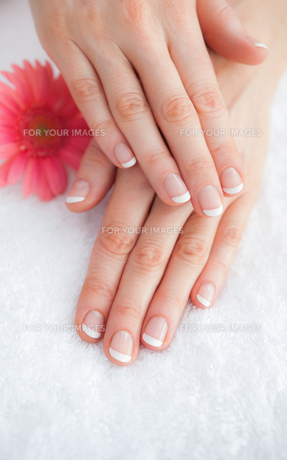 Flower with french manicured fingers at spa centerの写真素材 [FYI00488814]