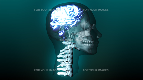 highly detailed animation of a human brainの写真素材 [FYI00488846]