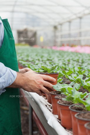 Garden center worker putting potted plant downの写真素材 [FYI00488885]