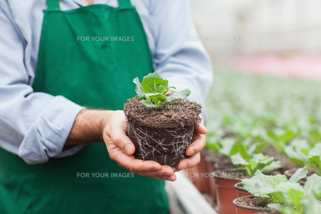 Garden center worker holding plant out of its potの写真素材 [FYI00488893]