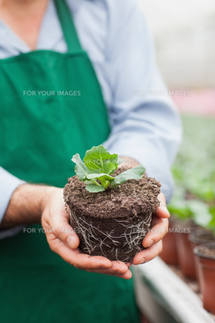 Garden center worker holding out plantの写真素材 [FYI00488894]