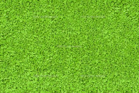 Green nature textureの素材 [FYI00488916]