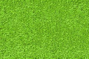 Green nature textureの写真素材 [FYI00488916]