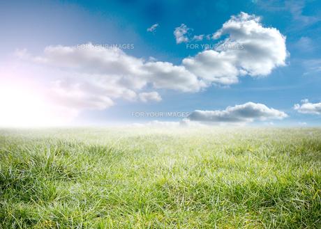 Beauitful green meadowの素材 [FYI00488918]