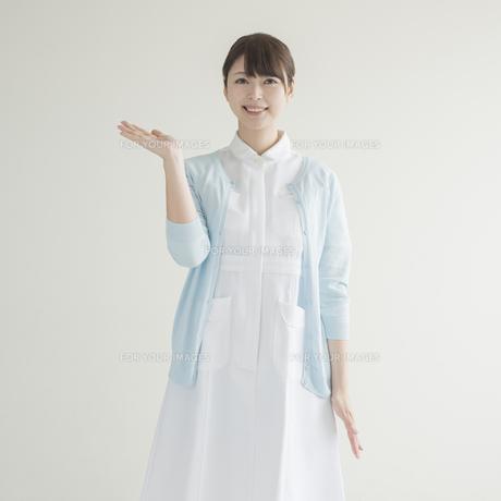 片手を挙げる看護師の写真素材 [FYI00491349]