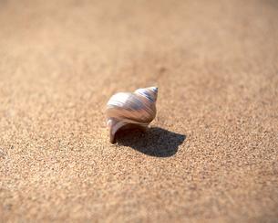 貝殻の素材 [FYI00492001]