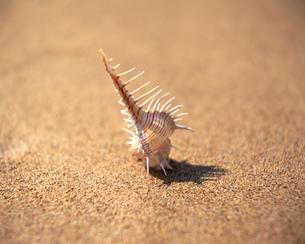 貝殻の素材 [FYI00492005]
