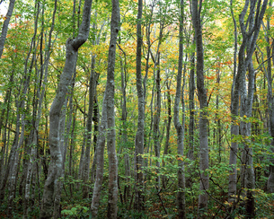 秋の森林の素材 [FYI00492122]