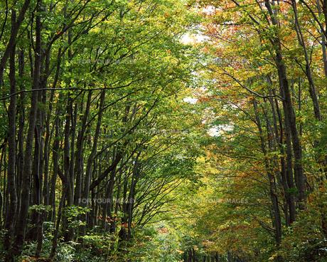 秋の森林の素材 [FYI00492125]