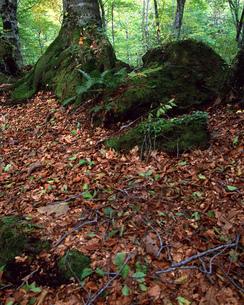 落葉の写真素材 [FYI00492135]