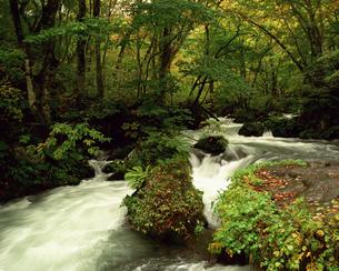 秋の奥入瀬渓流の写真素材 [FYI00492157]
